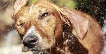 Hunde, Katzen & Co / Haustiere: Alles rund um Hund, Katze & Co. Schöne und spannende Fotostrecken, nützliche Tipps und Infos