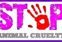 STOP ABUSE OF ALL KINDS  !!! / ANIMAL CAUSES | RIGHTS | QUOTES | FACTS :) / by Tammy Frazier