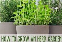 Herb Garden Indoors / We all love fresh herbs, and the are they details that make a difference in our dishes so why not go a step further and have your own indoor herb mini garden.