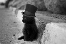 Kitties / by Sara Habein