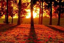 Autumn / Beautiful Autumn photographs.