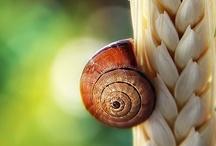 Escargots / by Cot Cot Cot