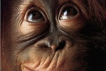 Primates / by Cot Cot Cot