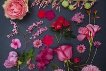 flora /// fauna. / by Hillary Bird