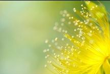 Le langage des fleurs / by Cot Cot Cot