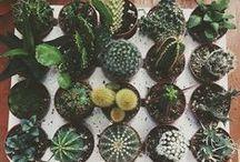 | plants & nature |