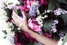 Botanicals / Because we love plants and we love people