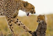 Animals that I love / animals / by Terri McManus