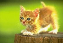 Adorable cats / Cats/Kittens / by Terri McManus