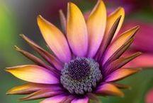 #Flower boom / Цветы, как россыпь лепестков!