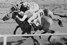 Race Horses / by Terri McManus