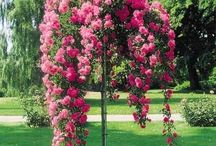 GARDEN & FLOWERS / ΚΗΠΟΣ & ΛΟΥΛΟΥΔΙΑ