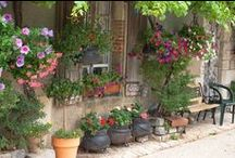 jardinage fleurs