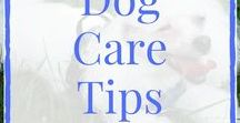 Dog Care Tips / Aren't dogs just the coolest? Check out these great dog care tips to keep your pup happy and healthy! Want to join this board? Comment on one of my recent pins and I'll send you an invite. Dog-related pins only. No abuse.