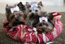 To Cute For Words... / These Sweetie Pies Won't Go To My Hips...
