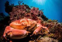 Underwaterphotography.com Photo Contest