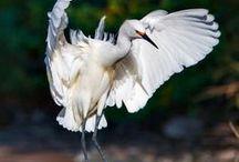 favorites birds