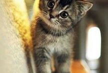 Cute Pets / Cute pets and animals that I would love to bring home !