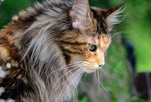 Cats ** nice and cute / by jophs
