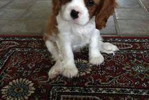 Cutest Puppies... / Puppies