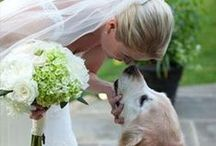 Wedding ***** dogs & cats include / by Jophs