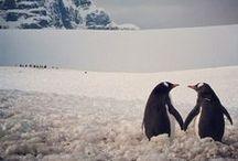 Pingüinos <3