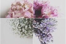 F L O W E R P O W E R / I think flowers are my favourite thing