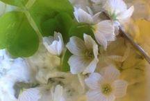 Vihreät Tassut villiyrttipuuhissa / Vihreiden Tssujen villiyrttihurmiota