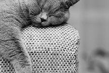 inspirations chats !  / A défaut d'en avoir un en vrai à caresser à la maison, comme quand j'étais petite, comme toujours, parce que l'Homme ne veux pas et parce que l'appartement + 2 enfants... c'est pas super top pour le chat...