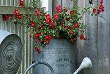 Gardening and yard ideas / by PENNIE MARKADAKIS