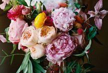 Fleurs / Snaps of flowers