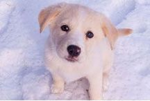 Pet cold weather tips