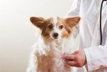 Veterinary Visits