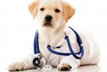 Canine Illness