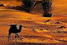Desert~