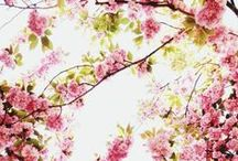 FLOWER / flower, picture, spring, wild, nature, trendpalette