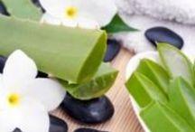 Aloe Vera / Informationen über die Pflanze. Produkte und Anwendungsgebiete mit Aloe Vera.  Die Heilpflanze schlecht hin. Sie aktiviert unsere Selbstheilung.