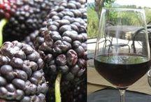 Wine Making Ideas