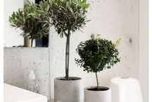 Beautiful Plants / Beautiful indoor plants