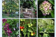Gardening Tips/Ideas #2 / Gardening Ideas & Tips Group Board. Hi, If You Want To Join A Board, Please Mention In The (ADD A COMMENT) Section of Any Pin on The First Board (ADD ME) Board Which Board(s) (Up to 25 Boards) You Want To Join, I Will Do The Rest. {PLEASE READ} NO DOLLAR $IGNS, NO SPAM, NO PEOPLE or PET PHOTOS. Thank You