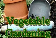 Vegetable Gardening Tips / Vegetable Garden Tips/Ideas Group Board. Hi, If You Want To Join A Board, Please Mention In The (ADD A COMMENT) Section of Any Pin on The First Board (ADD ME) Board Which Board(s) (Up to 25 Boards) You Want To Join, I Will Do The Rest. {PLEASE READ} NO DOLLAR $IGNS, NO SPAM, NO PEOPLE or PET PHOTOS. Thank You  / by ( Gardening Dig It )