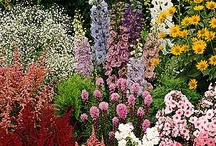 Perennial Flowers  / Perennials Group Board. Hi, If You Want To Join A Board, Please Mention In The (ADD A COMMENT) Section of Any Pin on The First Board (ADD ME) Board Which Board(s) (Up to 25 Boards) You Want To Join, I Will Do The Rest. {PLEASE READ} NO DOLLAR $IGNS, NO SPAM, NO PEOPLE or PET PHOTOS. Thank You