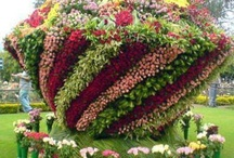 Vertical Gardens  / Vertical Garden Ideas & Tips Group Board. Hi, If You Want To Join A Board, Please Mention In The (ADD A COMMENT) Section of Any Pin on The First Board (ADD ME) Board Which Board(s) (Up to 25 Boards) You Want To Join, I Will Do The Rest. {PLEASE READ} NO DOLLAR $IGNS, NO SPAM, NO PEOPLE or PET PHOTOS. Thank You  / by ( Gardening Dig It )