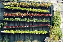Productive gardens / Creative ways to grow fruit and veg in your garden.