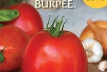Seed Catalogs Free 2014 / Free Seed, Bulb, Plant, Tree Catalogs 2014 / by ( Gardening Dig It )