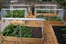Raised Garden Beds  / Raised Garden Beds Group Board. Hi, If You Want To Join A Board, Please Mention In The (ADD A COMMENT) Section of Any Pin on The First Board (ADD ME) Board Which Board(s) (Up to 25 Boards) You Want To Join, I Will Do The Rest. {PLEASE READ} NO DOLLAR $IGNS, NO SPAM, NO PEOPLE or PET PHOTOS. Thank You