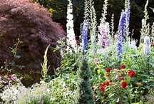 Cottage Gardens Ideas / The cottage garden Group Board. Hi, If You Want To Join A Board, Please Mention In The (ADD A COMMENT) Section of Any Pin on The First Board (ADD ME) Board Which Board(s) (Up to 25 Boards) You Want To Join, I Will Do The Rest. {PLEASE READ} NO DOLLAR $IGNS, NO SPAM, NO PEOPLE or PET PHOTOS. Thank You