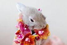 Cute bunny;))