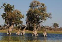 Reiseideen für Botswana / Die ASA-Reiseveranstalter stellen hier Reisevorschläge und einige Ideen für Safaris, individuelle und geführte Rundreisen durch Botswana und die Nachbarländer vor. Haben Sie Interesse an einem bestimmten Vorschlag? Gerne können Sie uns auf www.asa-africa.com/reiseangebote kontaktieren!