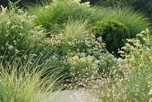 Designing with grasses / Grasses can be used effectively in the garden in so many different ways.